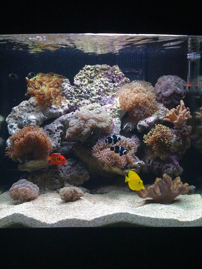 34 gallons reef tank (mostly live coral and fish) - 34G Red Sea Max