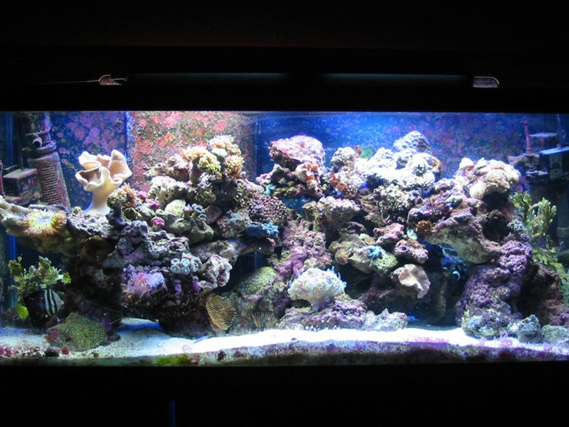 75 gallons reef tank (mostly live coral and fish) - My tank before it crashed