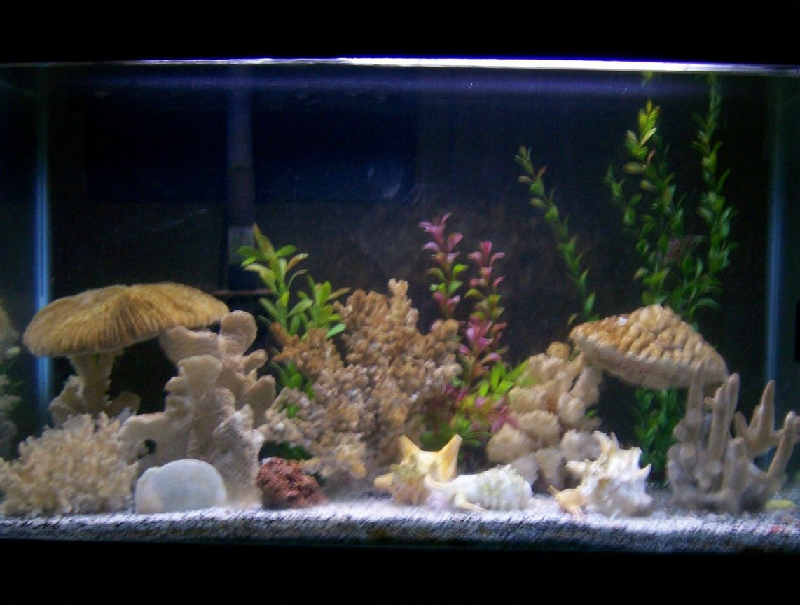 30 gallons reef tank (mostly live coral and fish) - Our 30 gallon with 2 green spotted puffers, 1 tire track eel, and 1 leaf fish, and 1 bristlenose pleco...i uploaded the pic under freshwater tank, but they put it under reef tank...it's actually brackish water