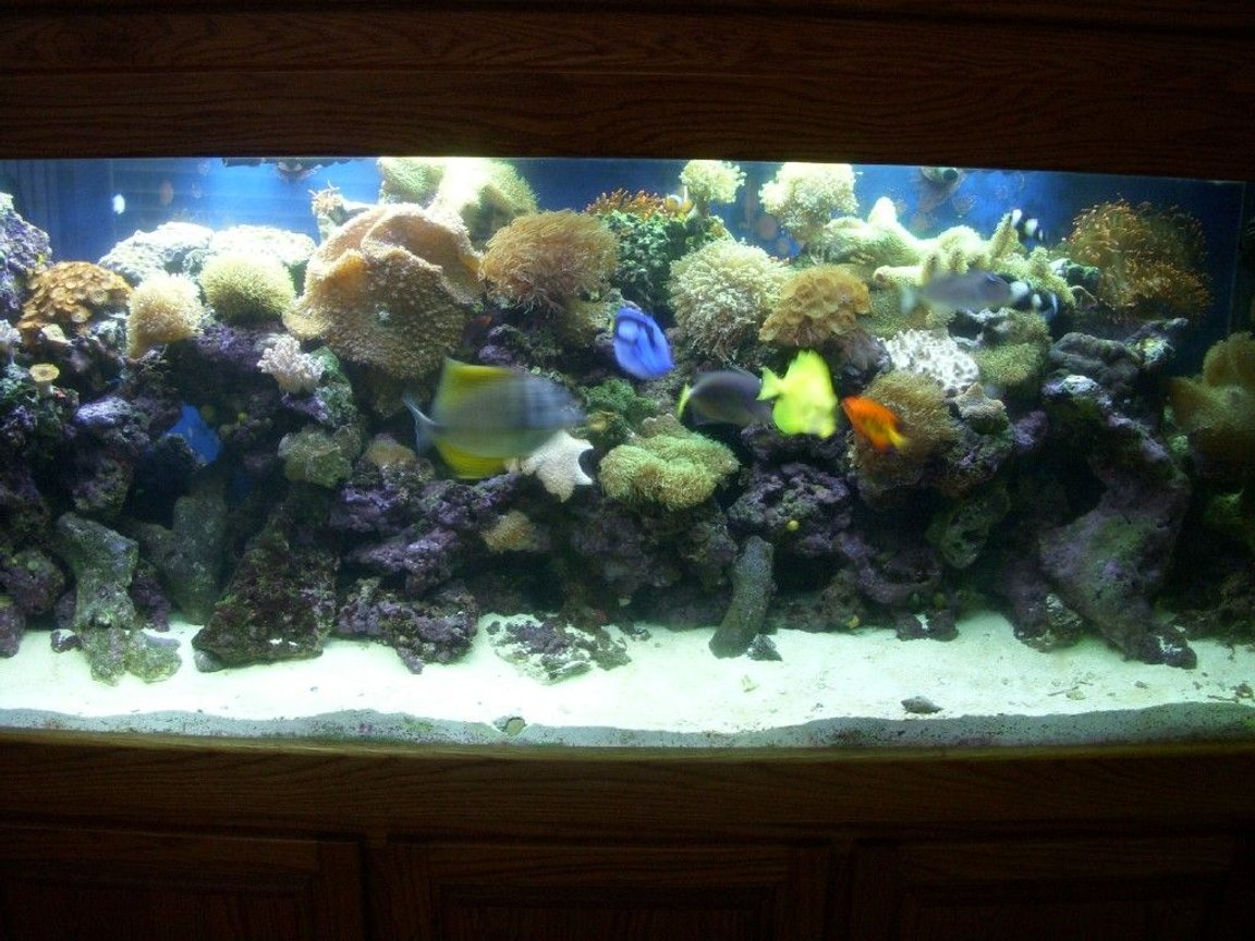 150 gallons reef tank (mostly live coral and fish) - 150 gallon reef tank