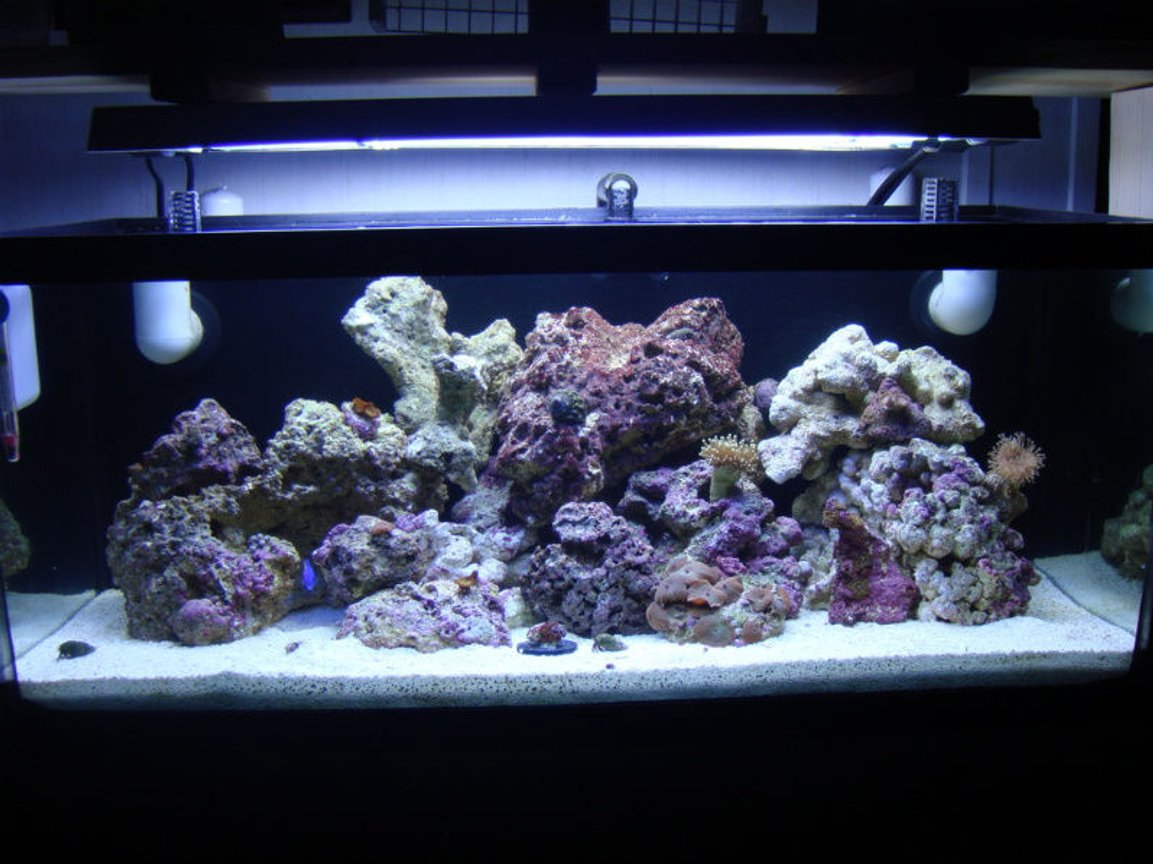 20 gallons reef tank (mostly live coral and fish) - Full tank shot