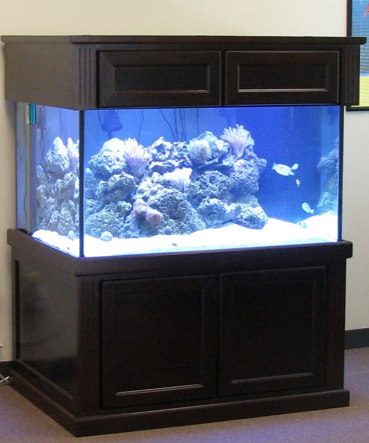 500 gallons reef tank (mostly live coral and fish) - My Setup, 200 gallon with 50 gallon sump