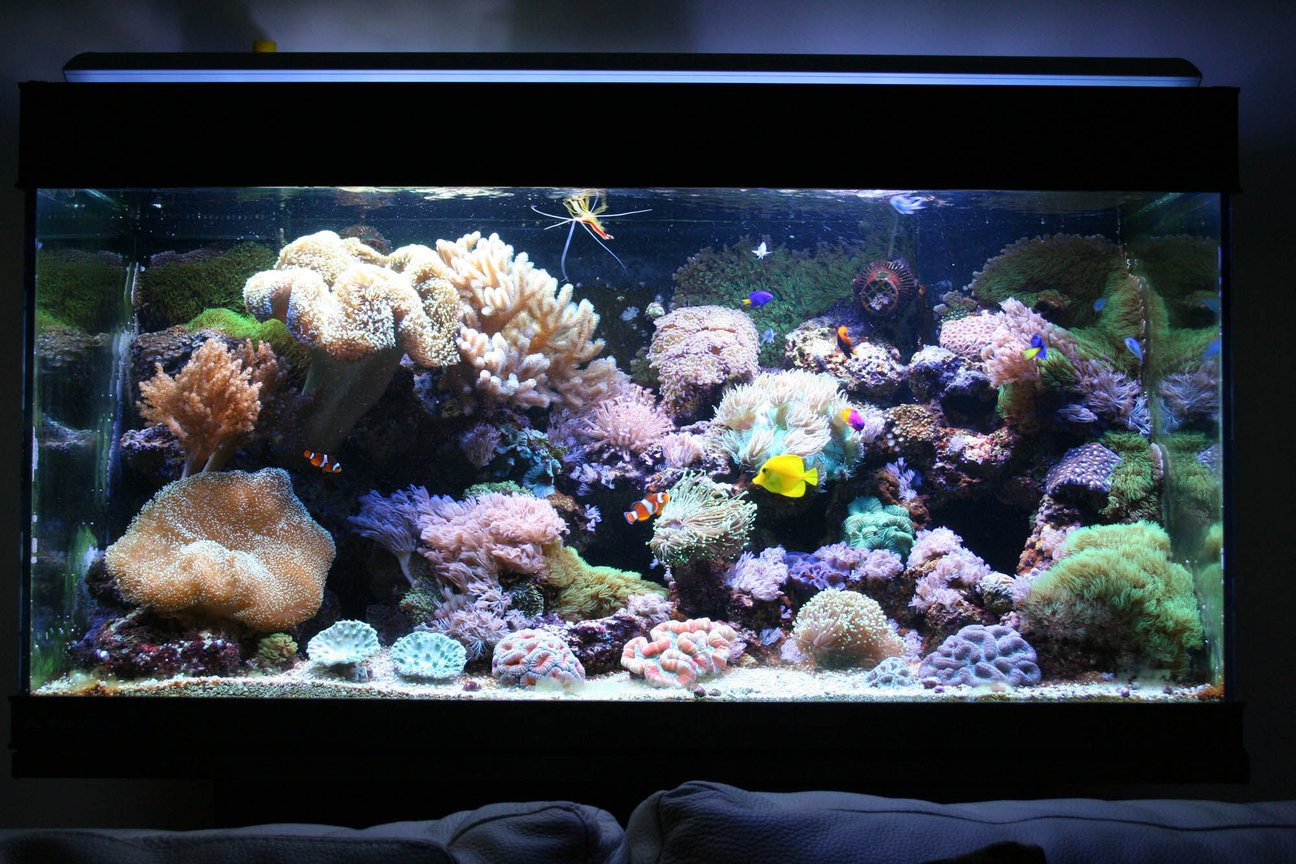 110 gallons reef tank (mostly live coral and fish) - 110g reef