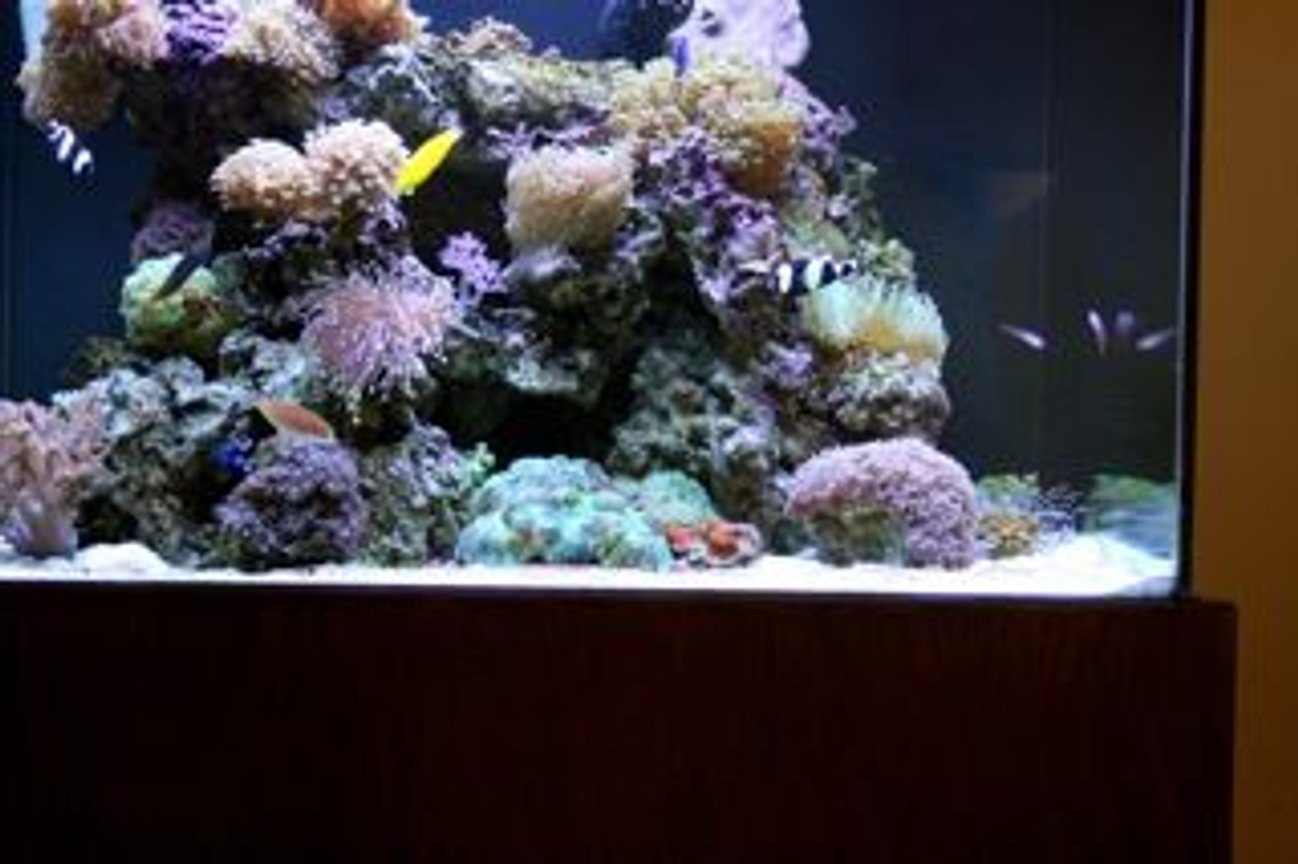 210 gallons reef tank (mostly live coral and fish) - Front Side View Right