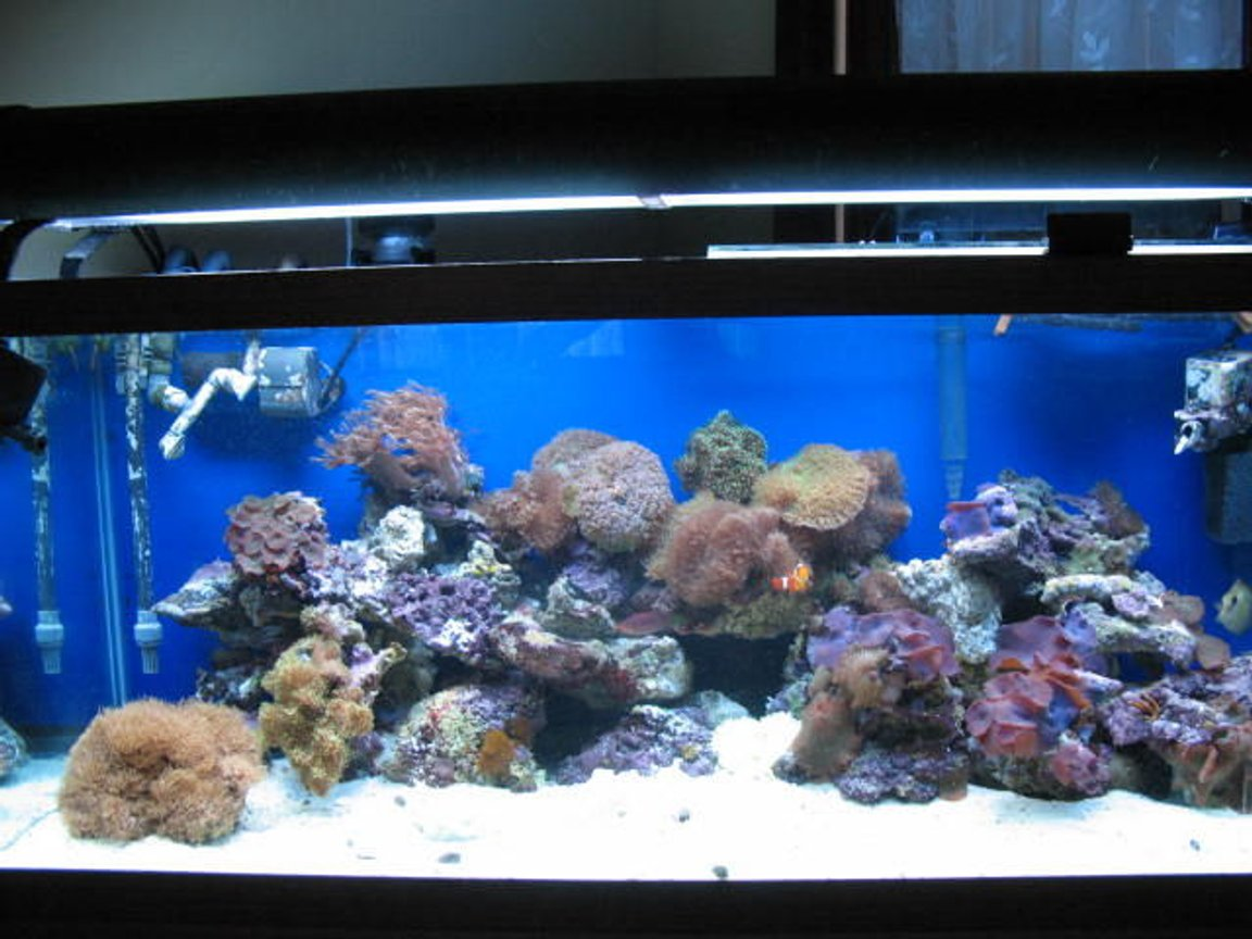 75 gallons reef tank (mostly live coral and fish) - 75 reef