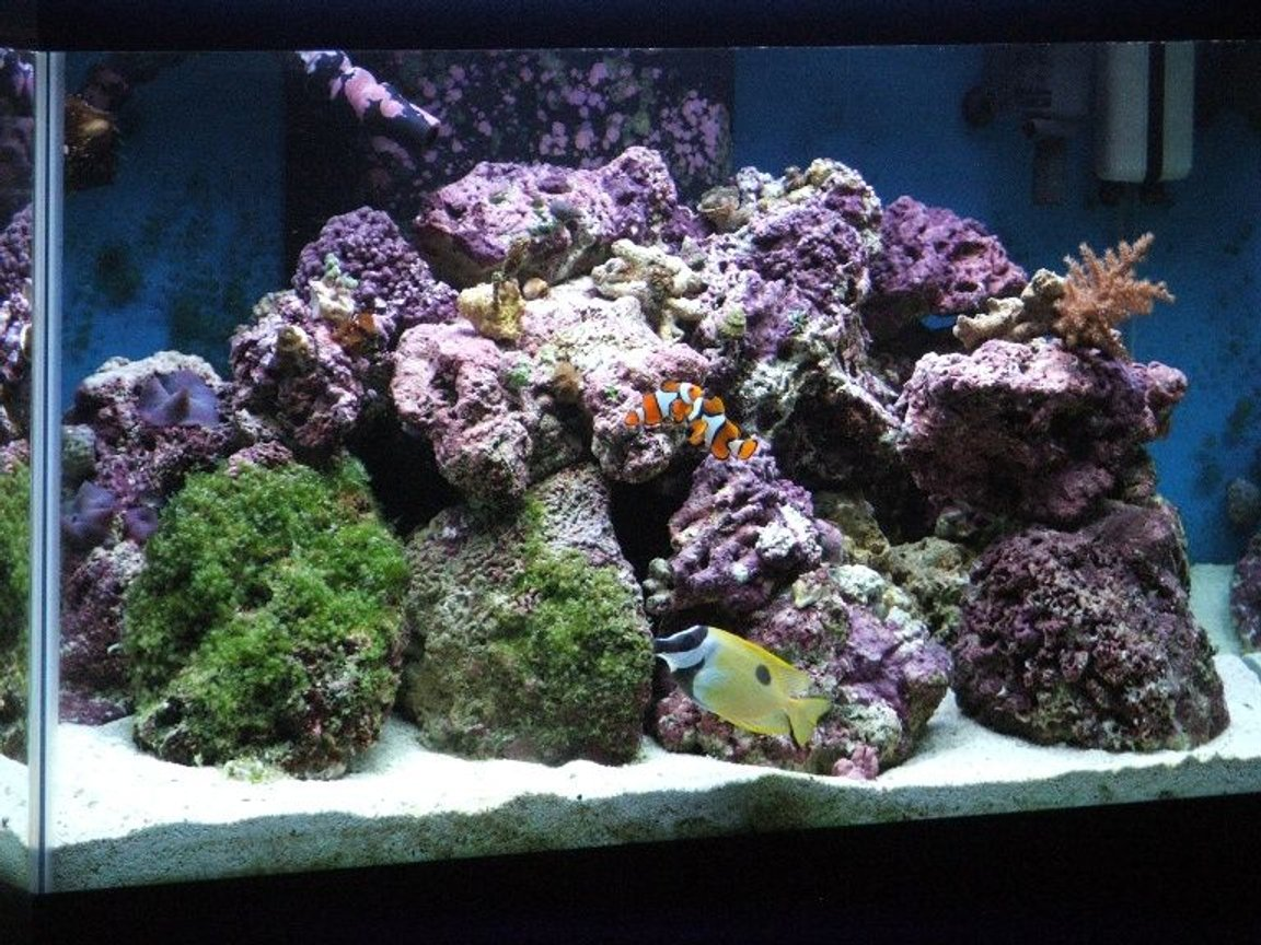 58 gallons reef tank (mostly live coral and fish) - My first reef tank! 58 gallon mixed reef.