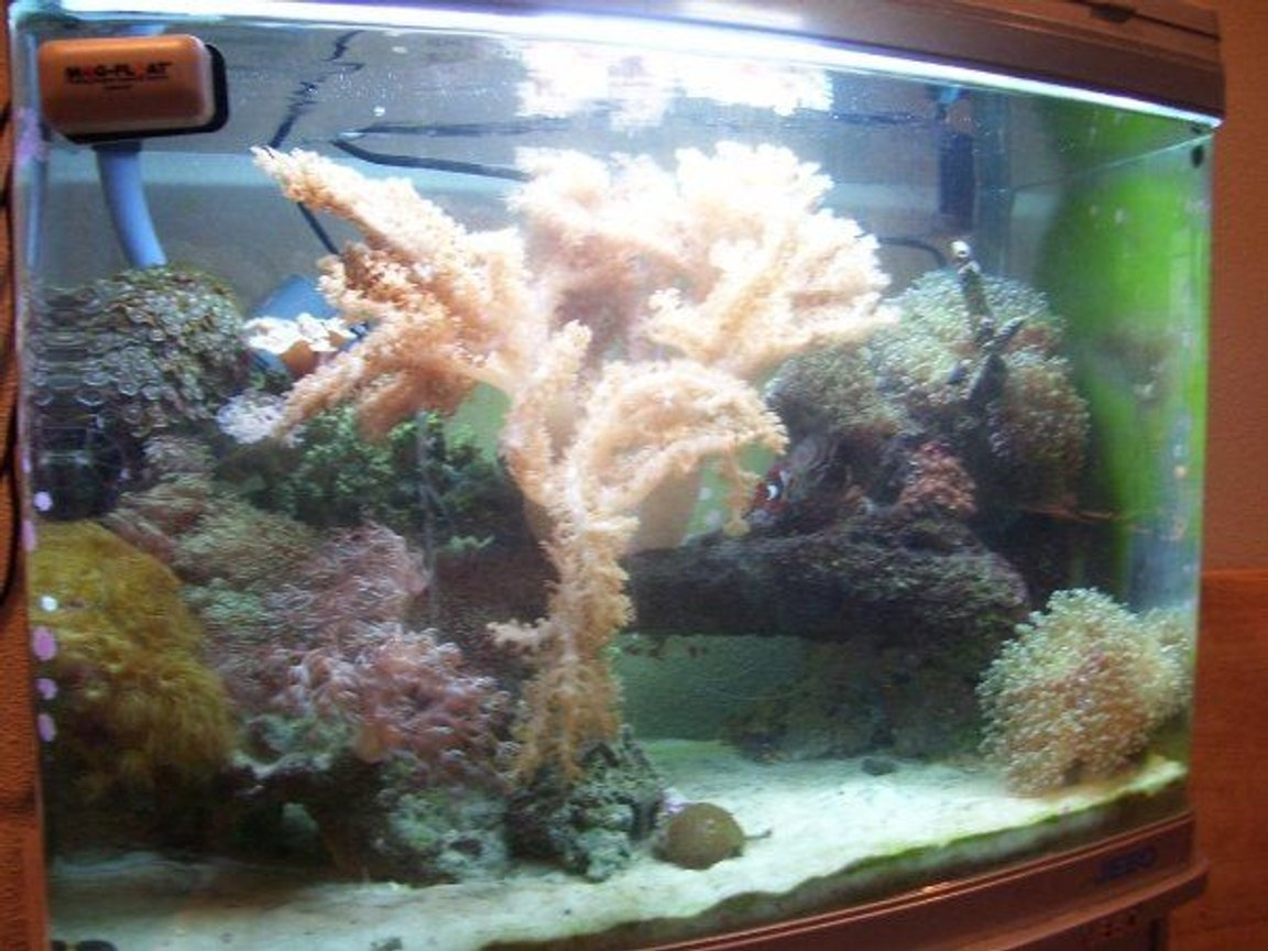 90 gallons reef tank (mostly live coral and fish) - 28 gallon reef