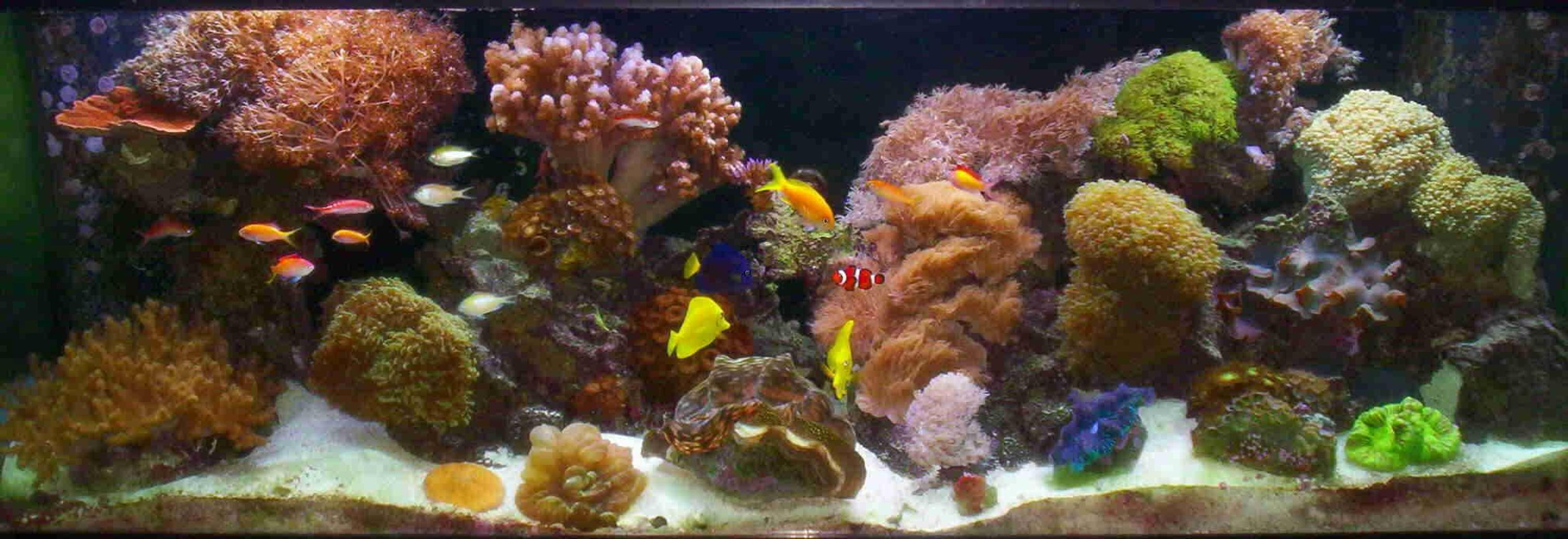 180 gallons reef tank (mostly live coral and fish) - 180 gal 2yr old tank