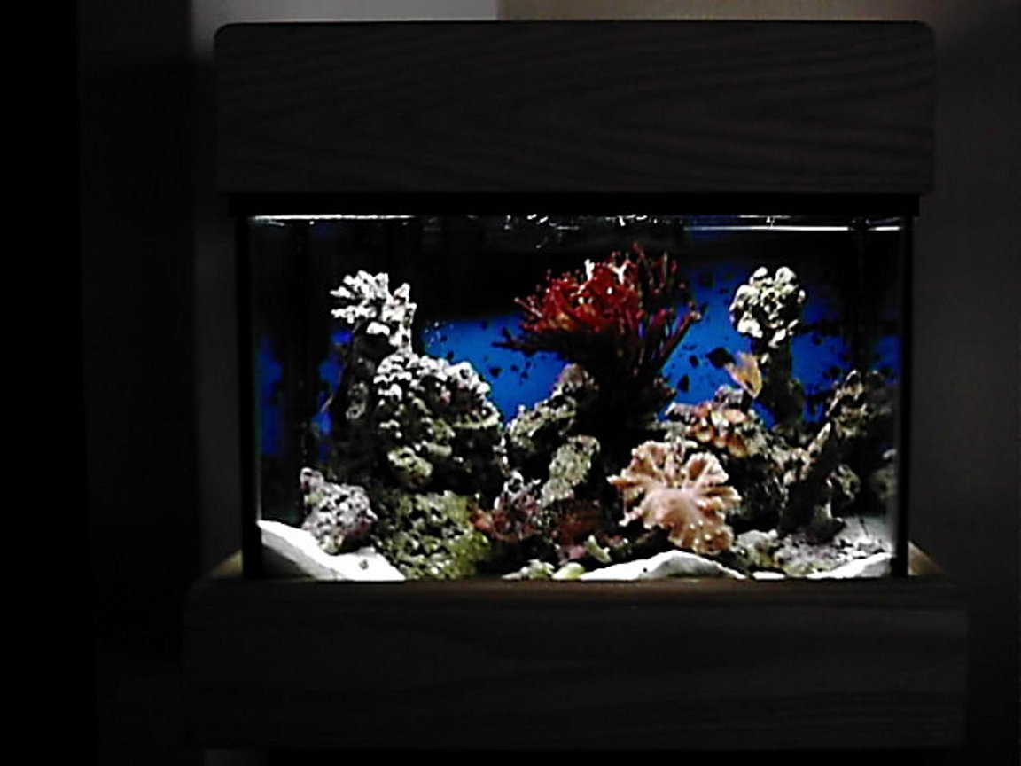 65 gallons reef tank (mostly live coral and fish) - my cute little 5 gallon. only a jebo skimmer with 10 watt jebo light. soon to go upto 20 watts. life includes two clowns (gold banded and red marron ) one hermit crab. red bamboo coral a little cabbage a beautiful colony of polops feather duster, and of course a pink anemonie for my clowns. no heater. i find that it is easier to keep a 5 gallon crisp than anything else. the water is never tested one 8 ounce glass change daily. the water is so clear it looks like the fish float in space.