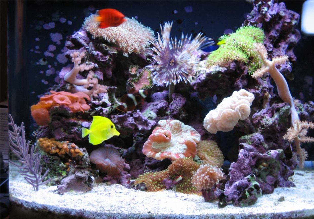 24 gallons reef tank (mostly live coral and fish) - 24 gal nano cube reef n fish