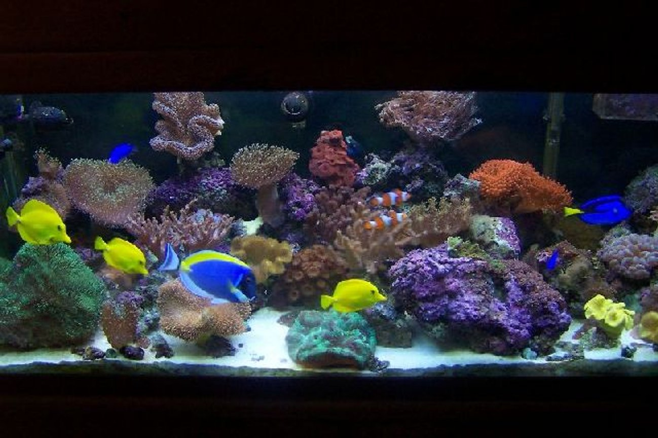 75 gallons reef tank (mostly live coral and fish) - 75 gallon new background
