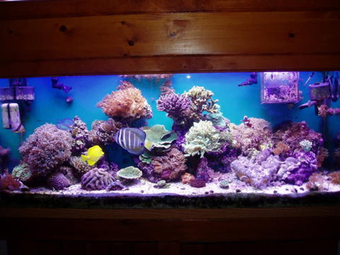 55 gallons reef tank (mostly live coral and fish) - Full shot, survived Katrina and other hurricanes!