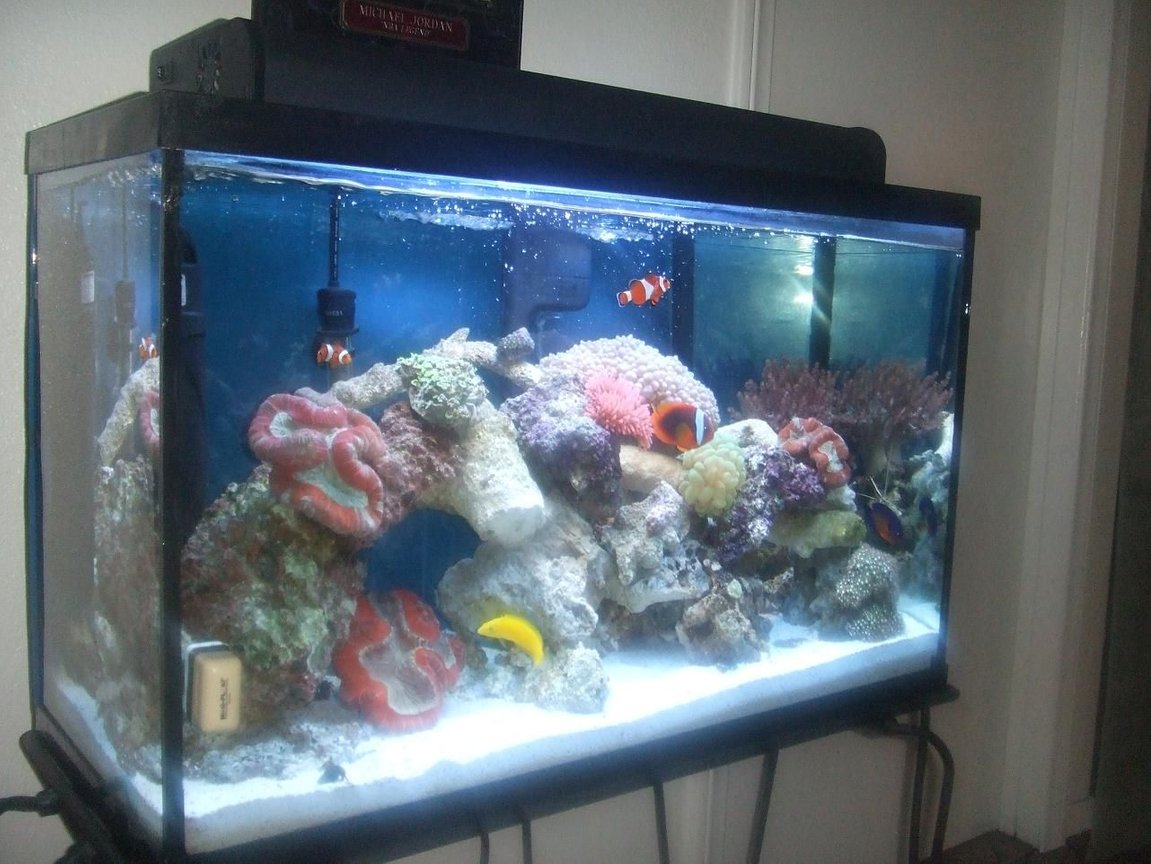 40 gallons reef tank (mostly live coral and fish) - other side view