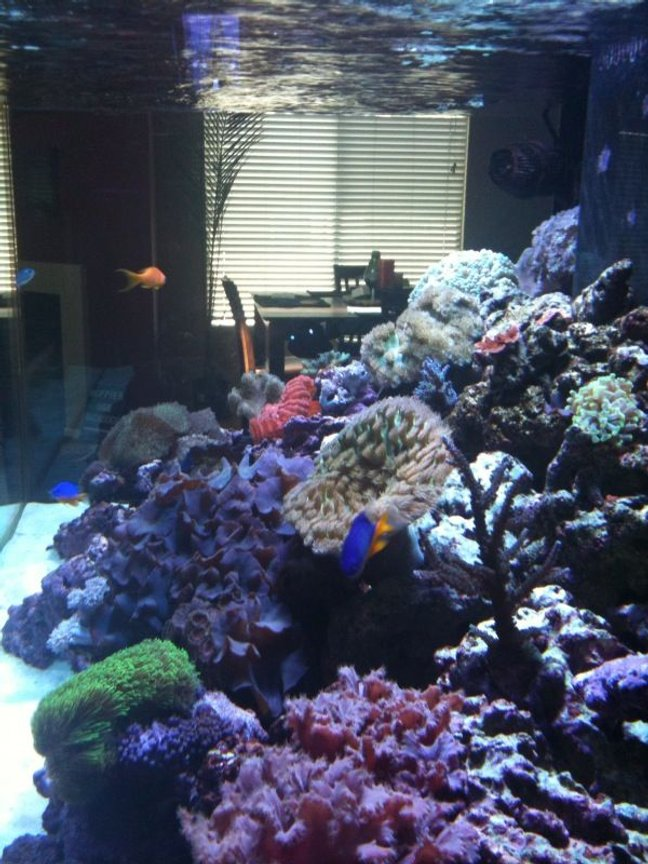 180 gallons reef tank (mostly live coral and fish) - Sorry about the pic. It was snapped with an Iphone camera and then emailed to me. You get the idea tho.