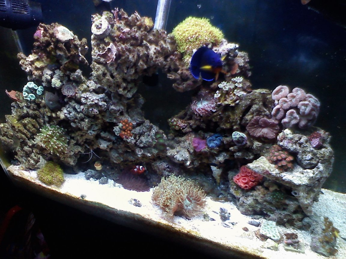 37 gallons reef tank (mostly live coral and fish) - born 08-17-09
