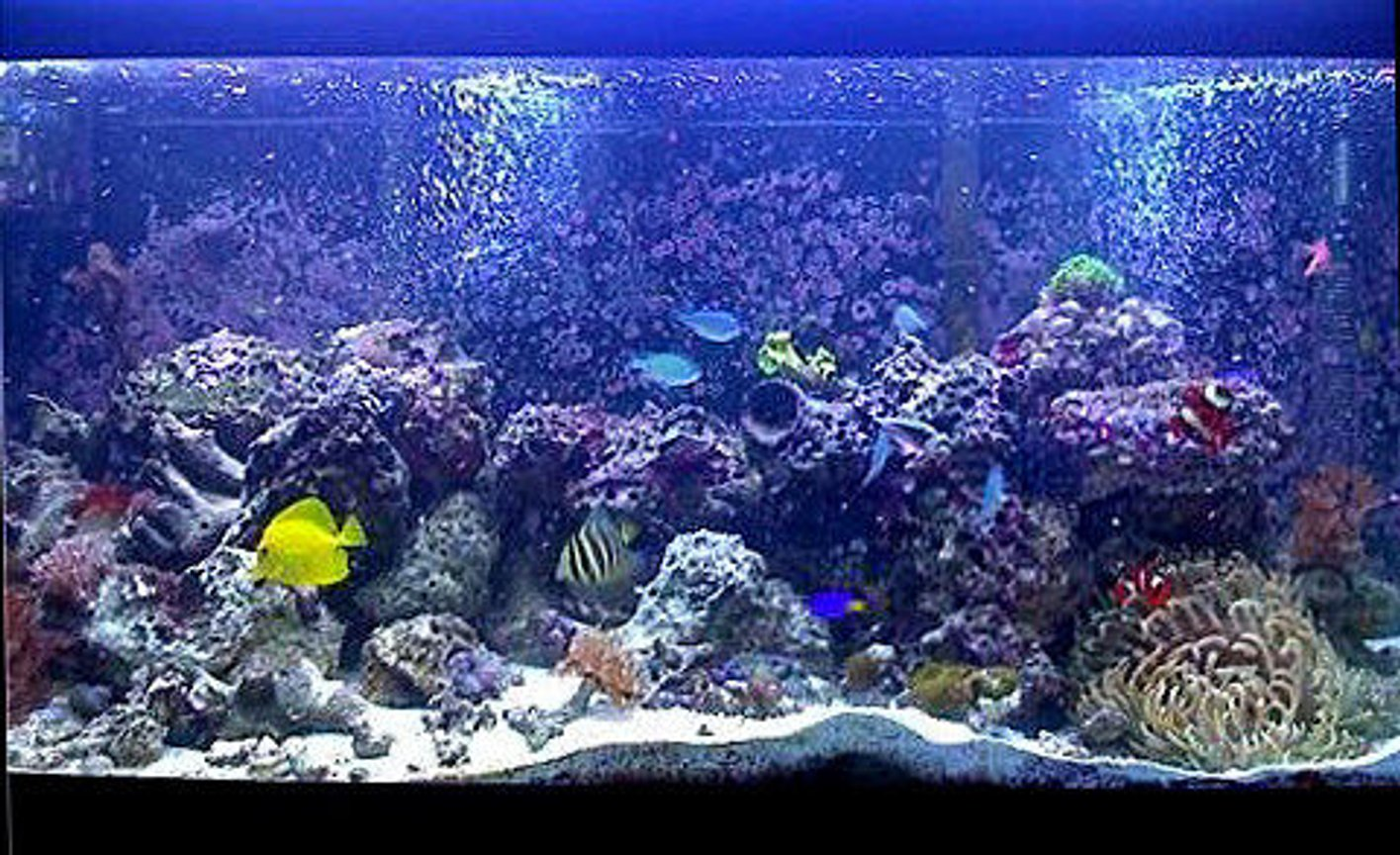 75 gallons reef tank (mostly live coral and fish) - .