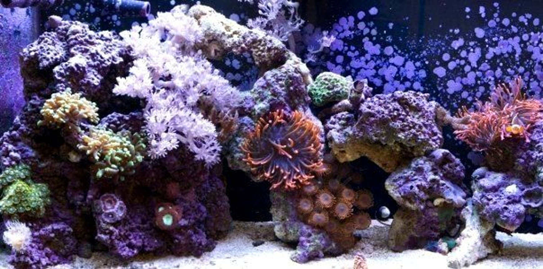 55 gallons reef tank (mostly live coral and fish) - My 55 gallon reef tank a few months ago.