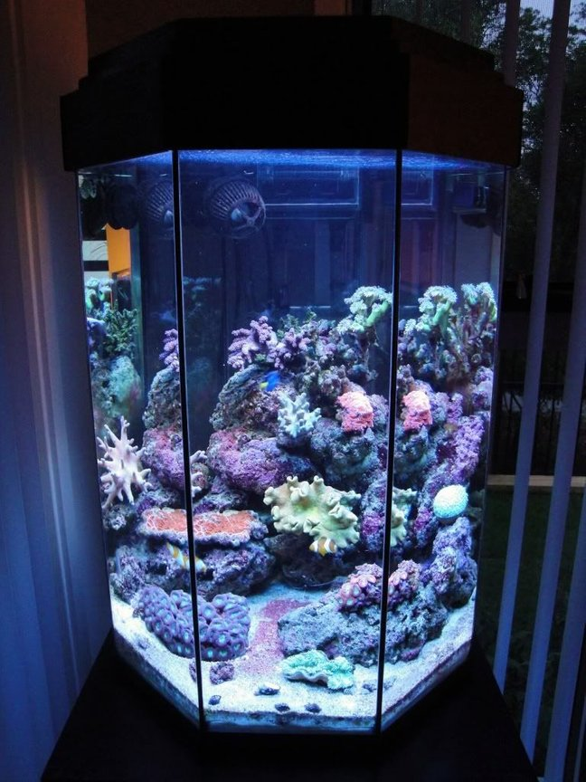 26 gallons reef tank (mostly live coral and fish) - My 110L Octagonal Reef Tank Front