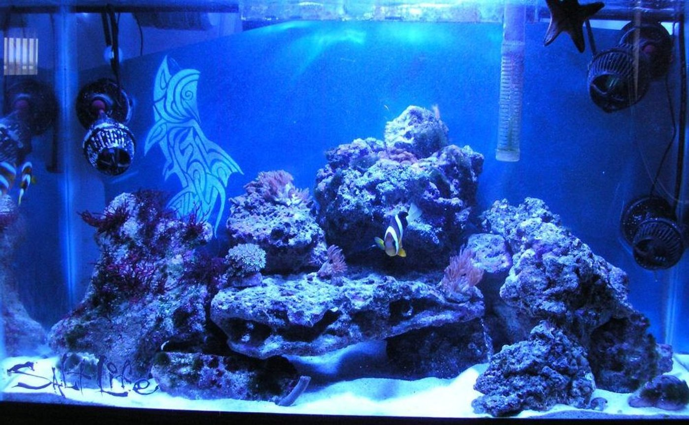 29 gallons reef tank (mostly live coral and fish) - My 29 gal soon to be reef