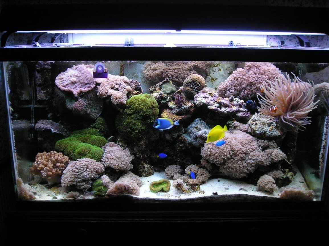 120 gallons reef tank (mostly live coral and fish) - my 120 gallon reef