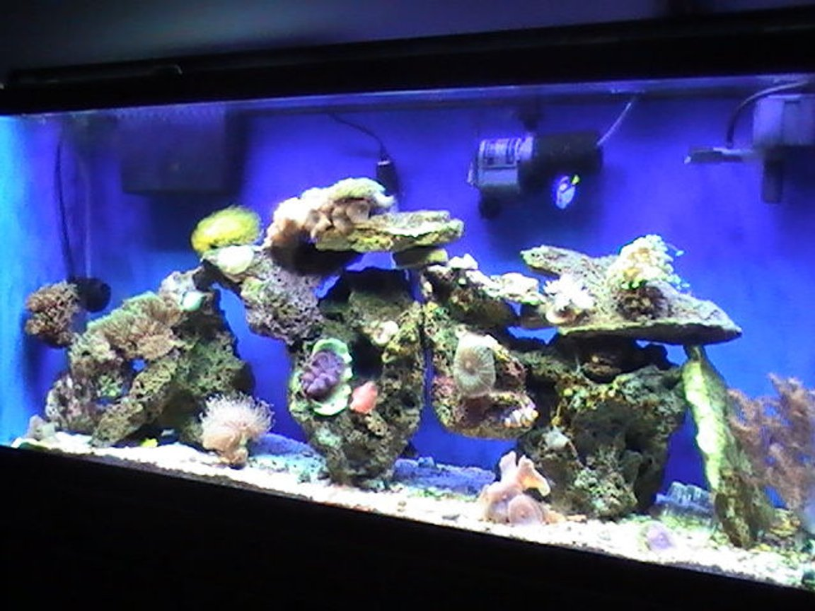 55 gallons reef tank (mostly live coral and fish) - Full View 55