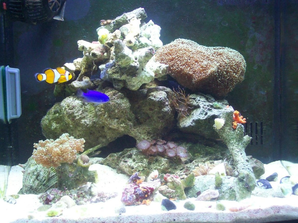14 gallons reef tank (mostly live coral and fish) - what can you find in my tank???