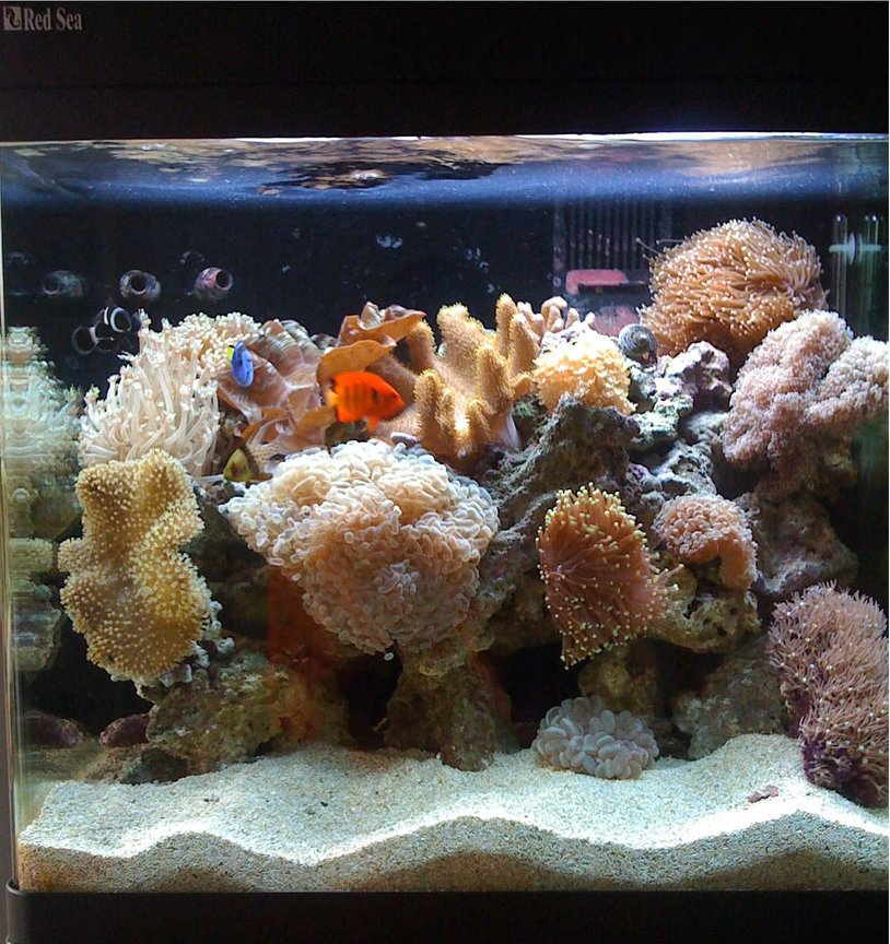 34 gallons reef tank (mostly live coral and fish) - Updated Red Sea Max '2010