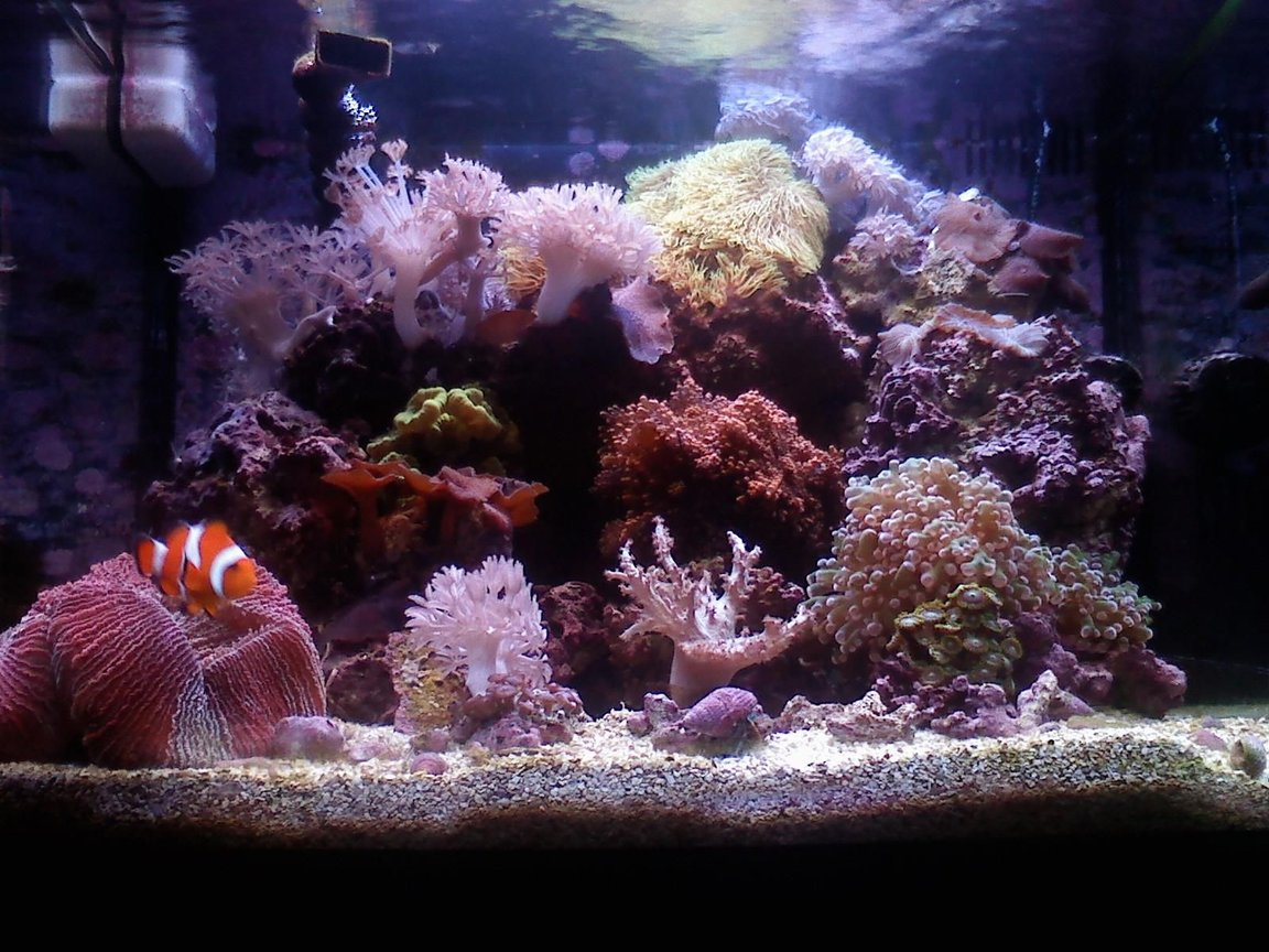 14 gallons reef tank (mostly live coral and fish) - 29 gal. biocube 10 months old