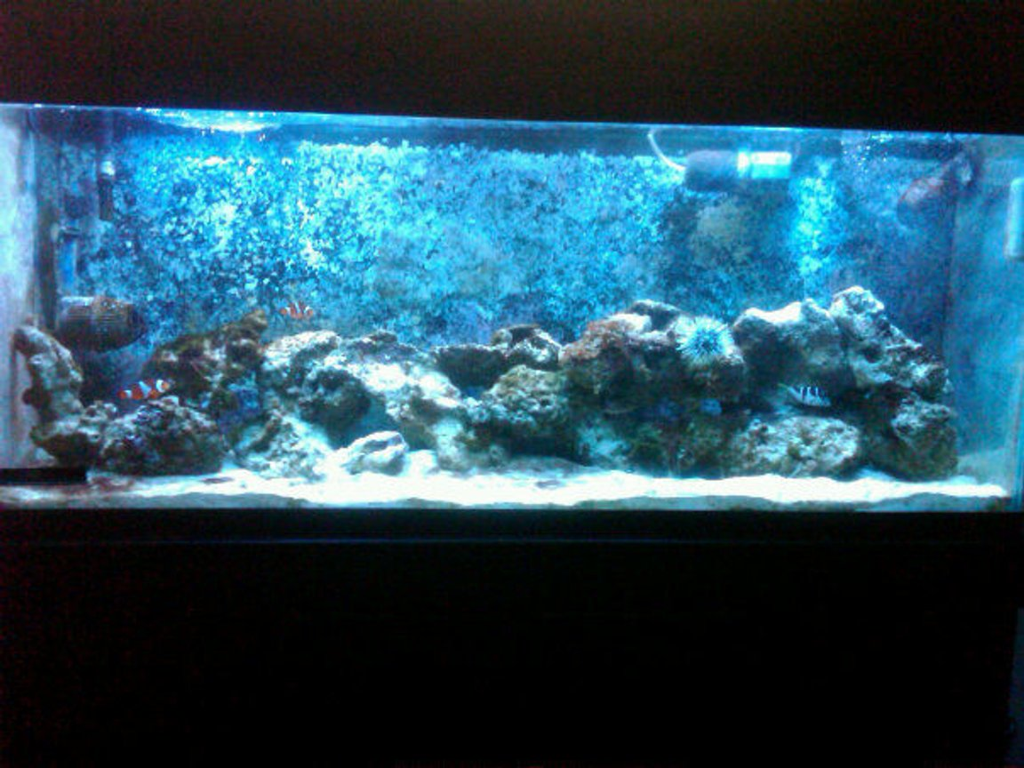 55 gallons reef tank (mostly live coral and fish) - 55 gallon reef tank.