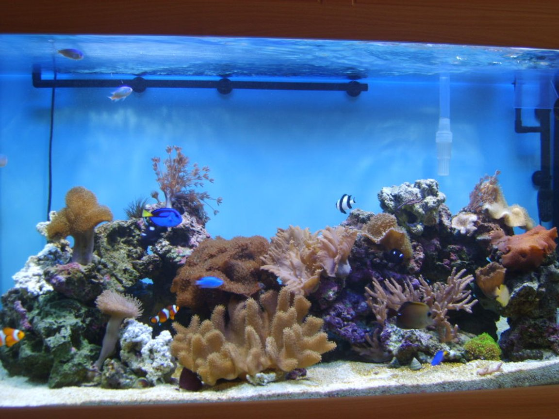 100 gallons reef tank (mostly live coral and fish) - my pride and joy
