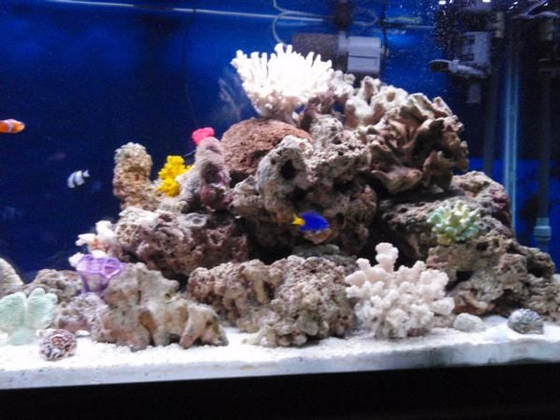 90 gallons reef tank (mostly live coral and fish) - right side