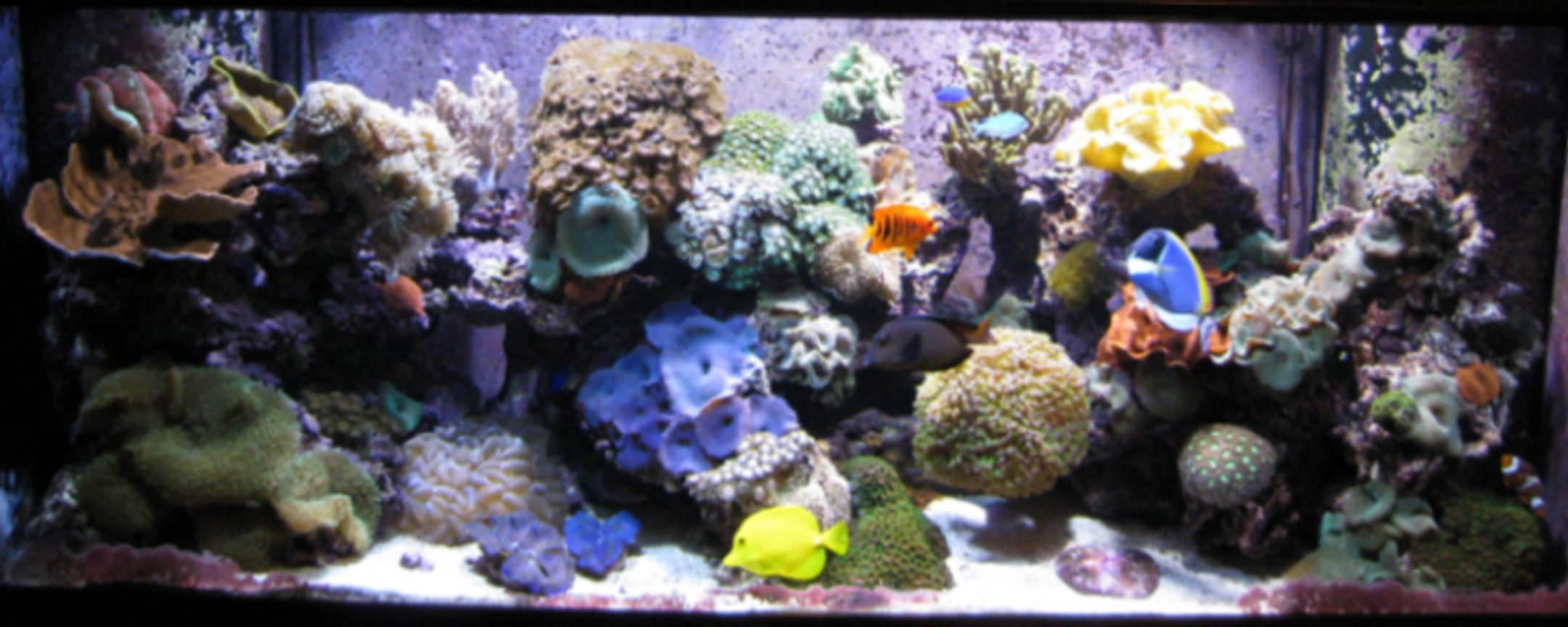 120 gallons reef tank (mostly live coral and fish) - 2 yrs old - 2010 March