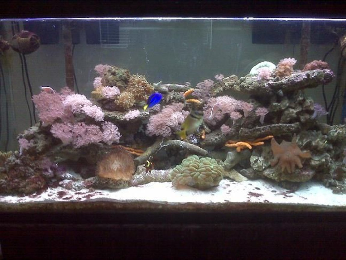 75 gallons reef tank (mostly live coral and fish) - Trying to let the ecosystem develop as naturally as possible. Simplest of tank designs, 75 gallon tank with 2 hang on the back Aqueon 40 filters, 2 T-5 coralif combo lights, 2 Koralia #2 powerheads. This tank has been up and running for 1 1/2 years.