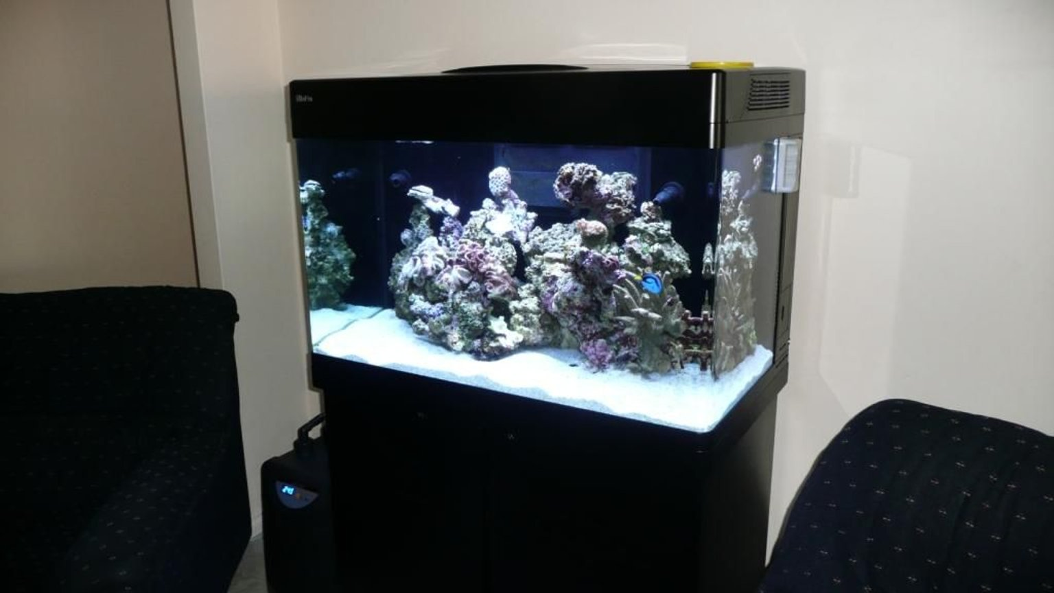 60 gallons reef tank (mostly live coral and fish) - RedSea Max 250