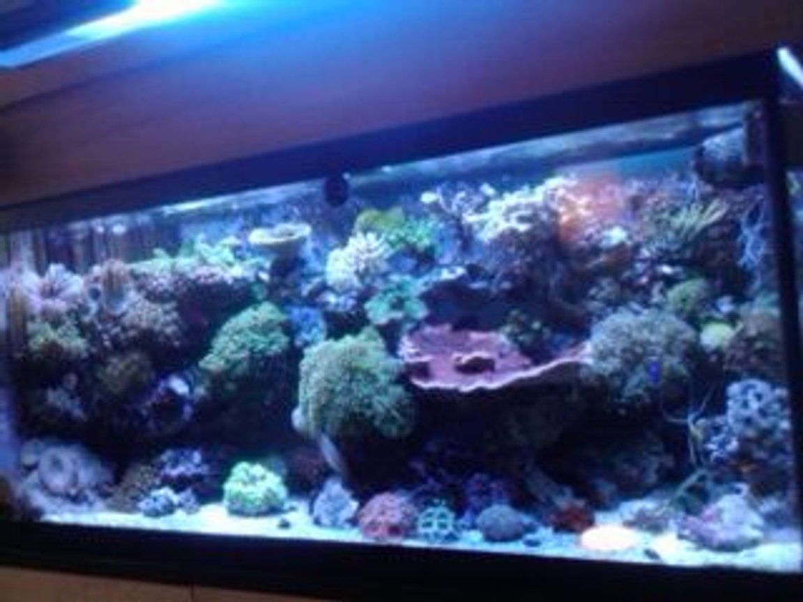 75 gallons reef tank (mostly live coral and fish) - Front View
