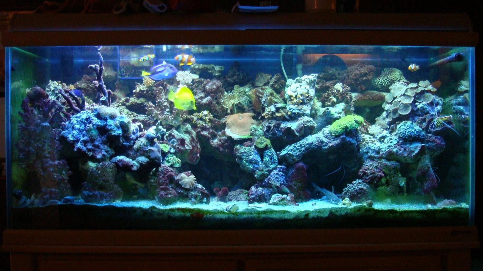 75 gallons reef tank (mostly live coral and fish) - 75g reef
