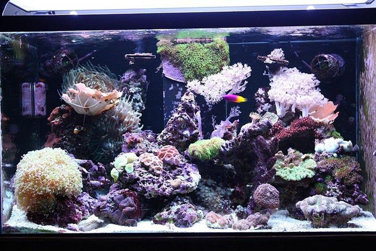 62 gallons reef tank (mostly live coral and fish) - 62 gallon mixed reef