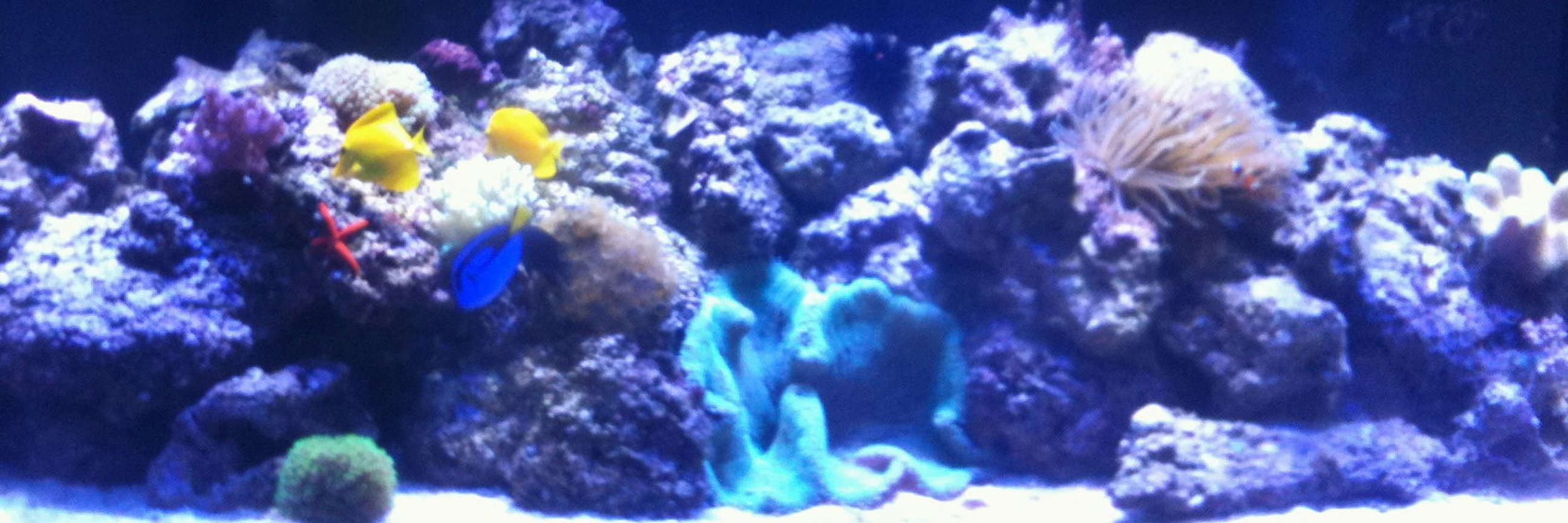 210 gallons reef tank (mostly live coral and fish) - 210 gallon reef tank