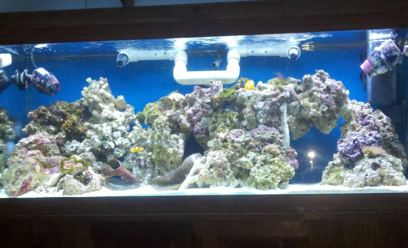 75 gallons reef tank (mostly live coral and fish) - sorta crappy fulltank shot using cellphone