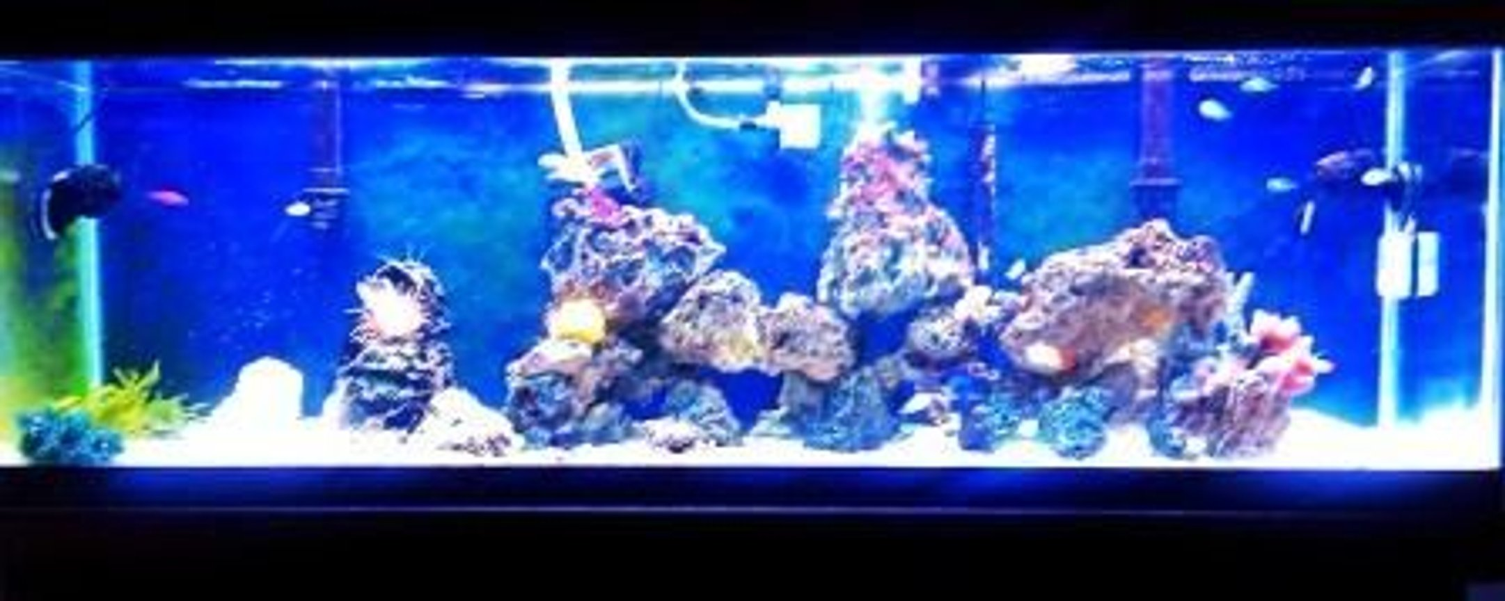 125 gallons reef tank (mostly live coral and fish) - Yeah I know....... I need a better camera than the one on my phone. But I wanted a completed page. This is week 35 and counting.