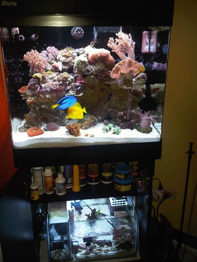 34 gallons reef tank (mostly live coral and fish) - This is my RSM130D with DIY Sump....