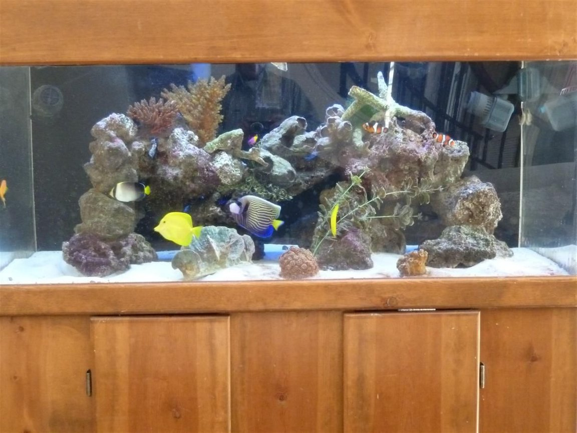 100 gallons reef tank (mostly live coral and fish) - wide 100 gallons tank with Emperor, tangs, angels.