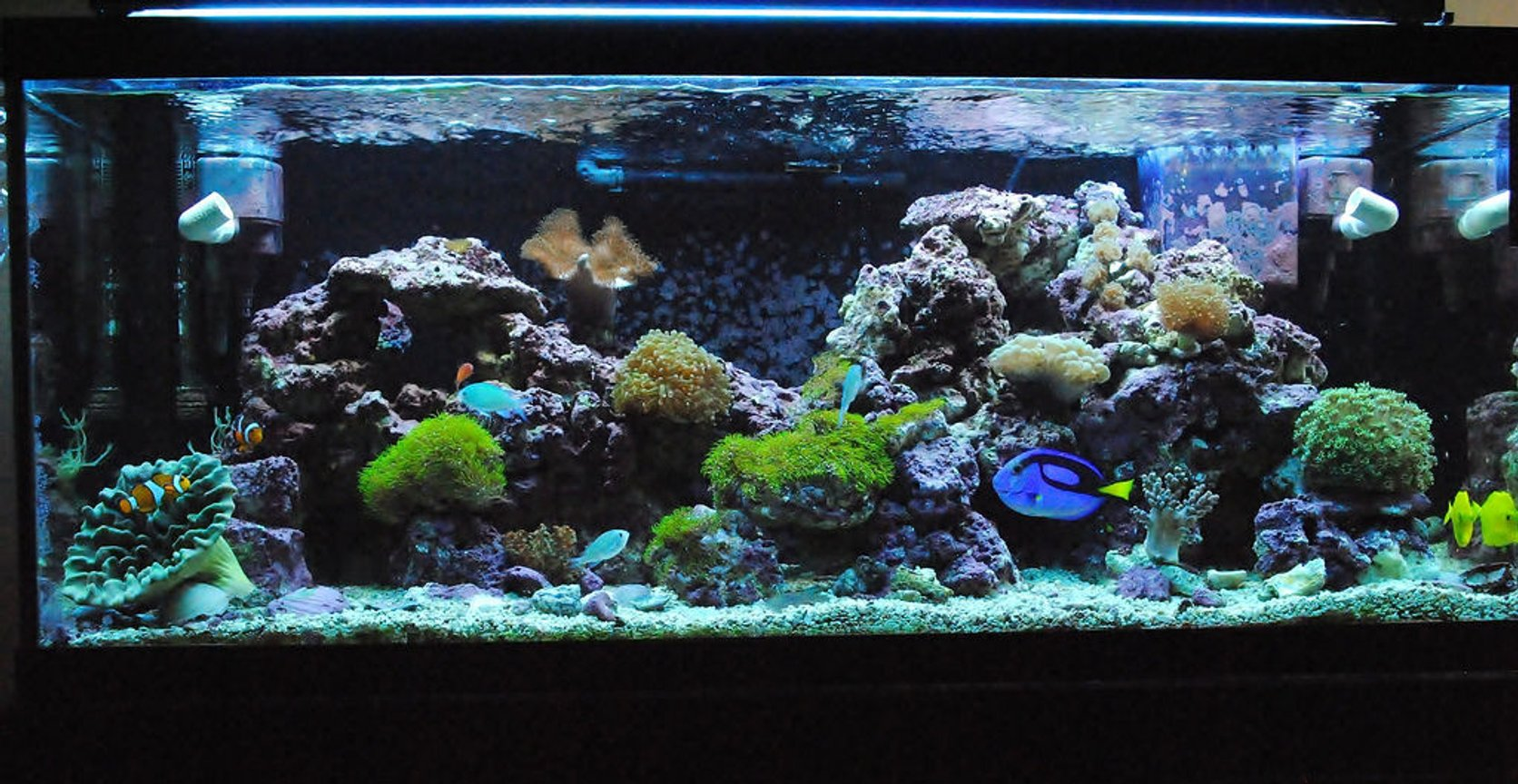 Photo 4 Another Picture Of My Newly Redesigned Aquascape