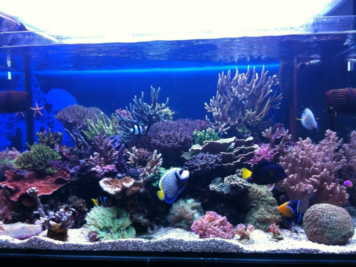 100 gallons reef tank (mostly live coral and fish) - front view