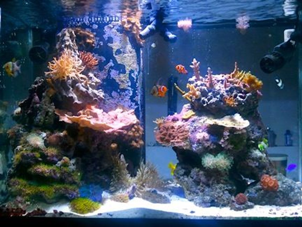 65 gallons reef tank (mostly live coral and fish) - Transition from a mix reef to the SPS dominated direction. An thats it.