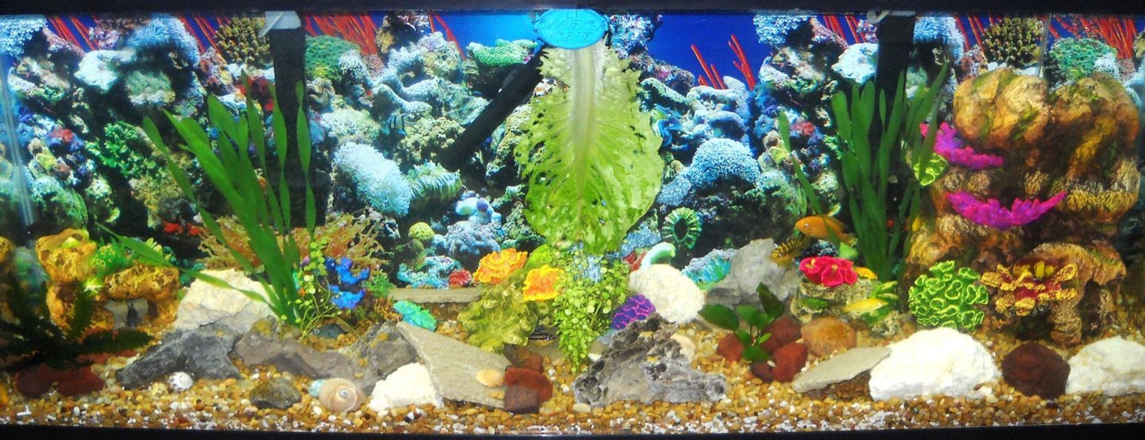 55 gallons reef tank (mostly live coral and fish) - 55g african cichlid