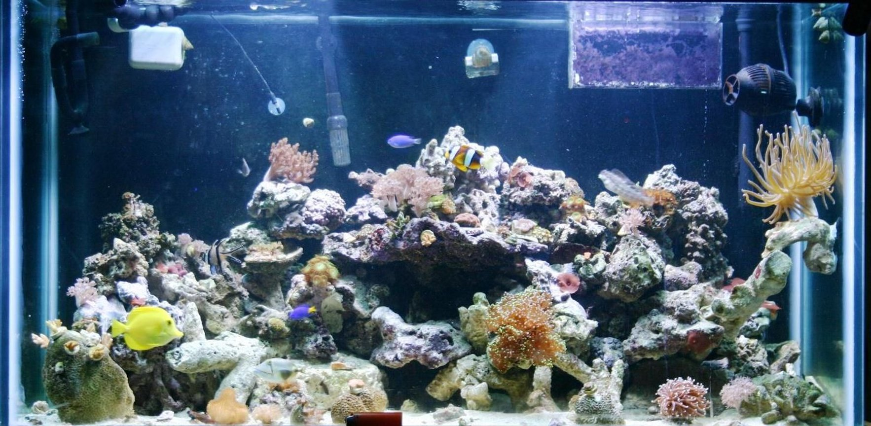 124 gallons reef tank (mostly live coral and fish) - one of my tanks