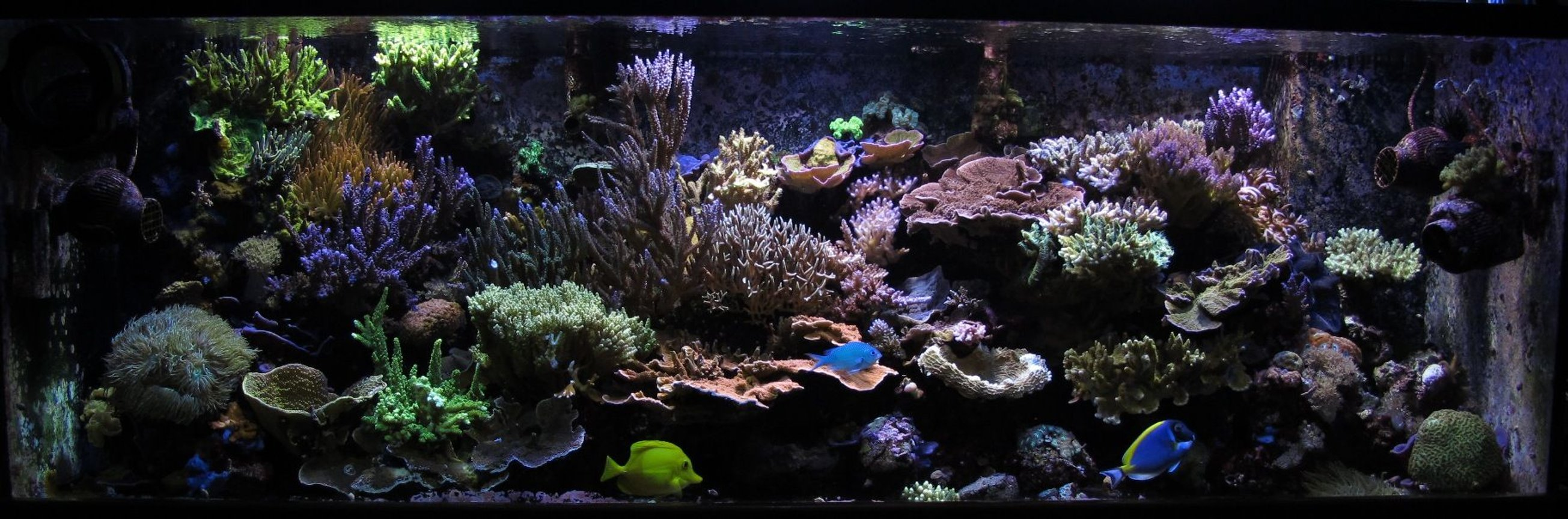 180 gallons reef tank (mostly live coral and fish) - 180 Gallon Las Vegas Reef Tank