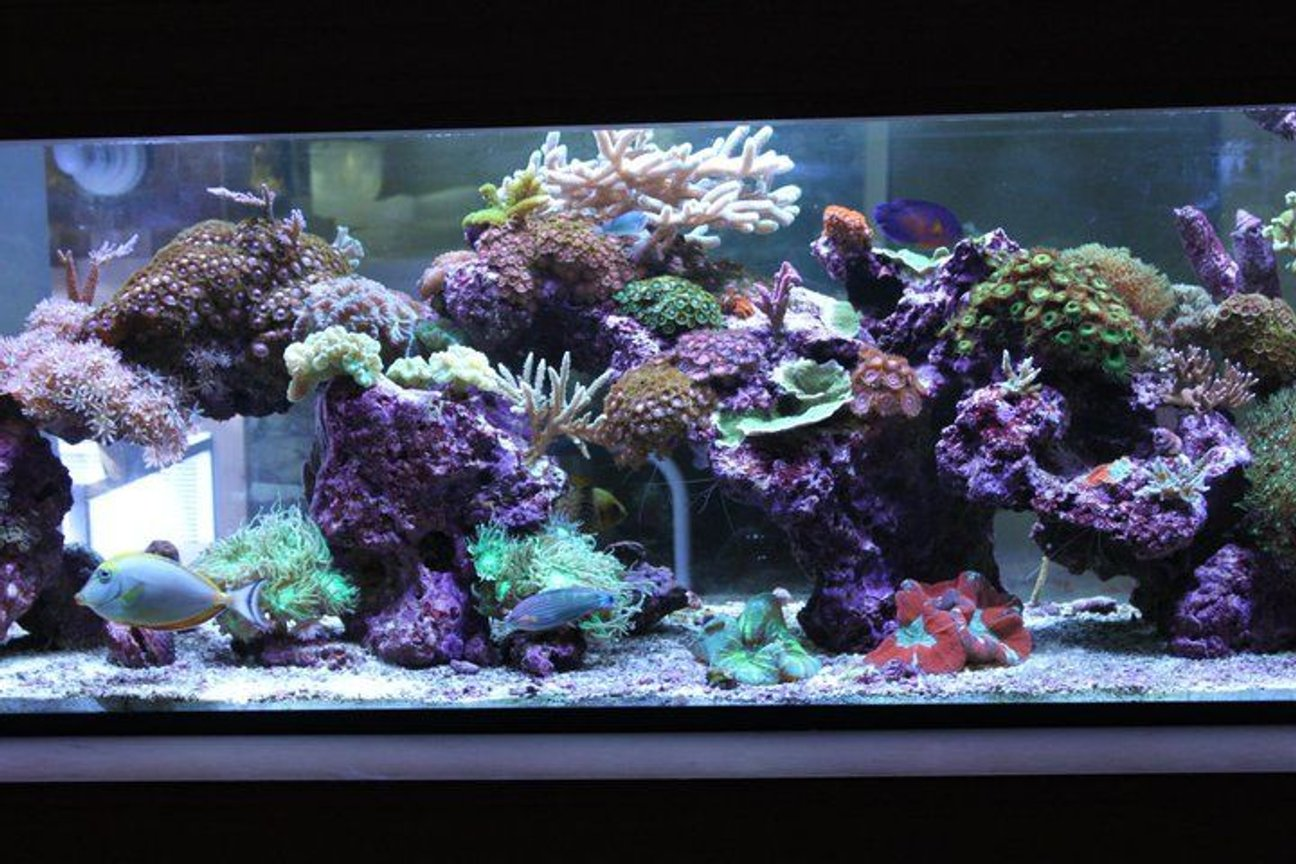 120 gallons reef tank (mostly live coral and fish) - My living room Aquascape