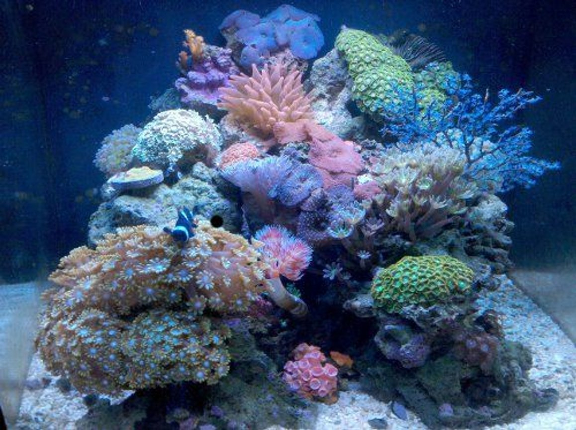 28 gallons reef tank (mostly live coral and fish) - Nano reef